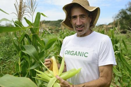 crop farming: Organic farming: portrait of an eco farmer showing corn inside the plantation
