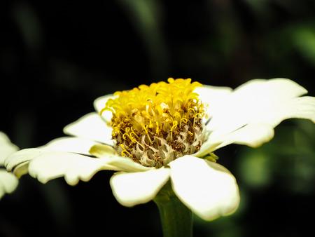 zoom in: zoom in the flower
