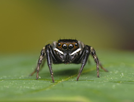 flower  crab  spider: spider single shot.image have shallow depth of field due to macro photography