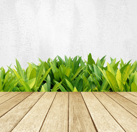 Perspective wood over green tree leaves and white cement wall background