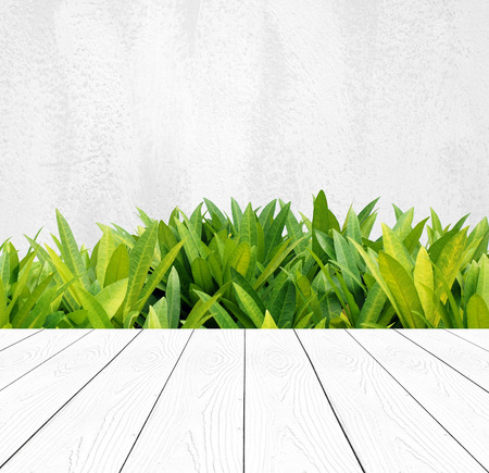 Perspective white wood over tree leaves and white cement wall background