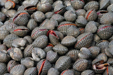 cockles: Fresh cockles with shells, seafood