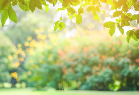 ピンぼけ光で、自然の背景ボケ公園秋、秋のシーズン