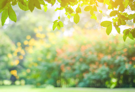Blurred park with bokeh light, nature background, fall, autumn season