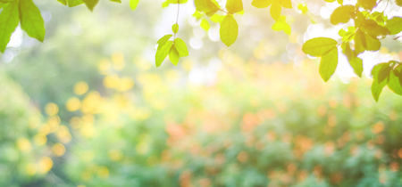 Blur park with bokeh light background, nature, garden, fall, autumn spring and summer season