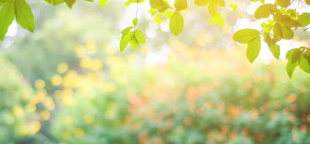 Offuschi il parco con il fondo della luce del bokeh, la natura, il giardino, la caduta, la primavera di autunno e la stagione estiva
