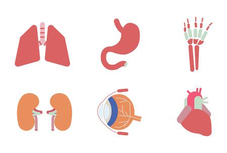 large intestine: Internal human organs. Flat design icons.
