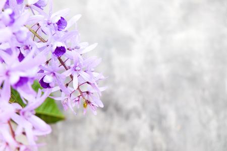 petrea: Petrea Flowers on the bright texture background