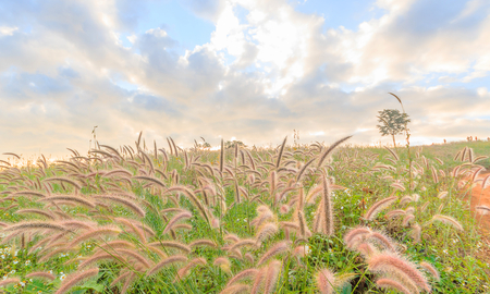 Wild field of grass on sunset, soft sun rays, warm tonight 免版税图像 - 118203900