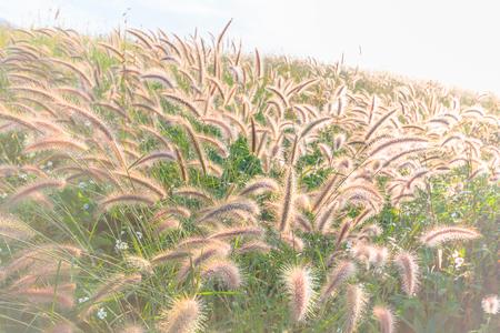 Wild field of grass on sunset, soft sun rays, warm tonight 免版税图像 - 118203916