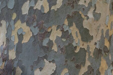 Natural surface texture of tree bark. Background pattern. Horizontal orientation.