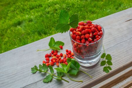 On a wooden surface is a glass of wild strawberries. Nearby scattered a few berries and leaves. Summer nature in the background with blur. Ripe berries are rich in vitamins for a healthy diet.