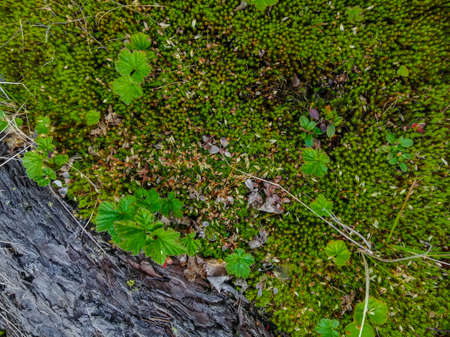 Soil, mosses, plants and dry twigs on the surface of the characteristic northern tundra landscape. Background image, landscape texture. The pristine nature of the Arctic. 免版税图像