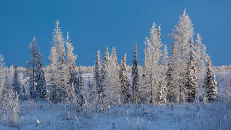 Winter landscape of a taiga forest with a drilling rig at the Northern oil and gas field. Everything around is covered with white snow. Blue sky. Frosty polar day in the Arctic