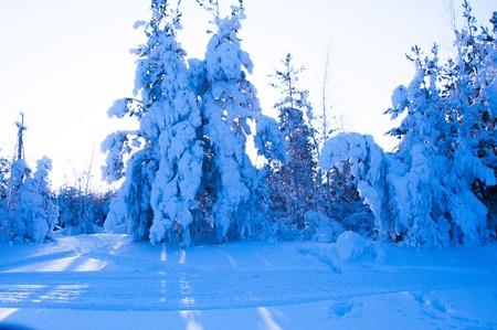ural: Beautiful snowy winter in Russia. Siberia. Stock Photo