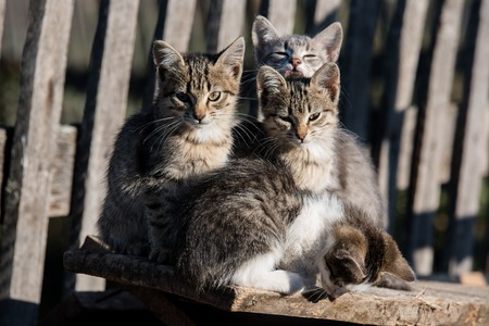 Four kittens sitting on the Board next to the wooden village fence Stock Photo