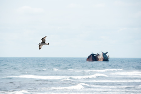 Small seabird flying on background of sunk ship in sea.  Stock Photo