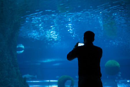 Back view of person taking shots of aquarium with smartphone camera. Horizontal indoors shot. Stock Photo