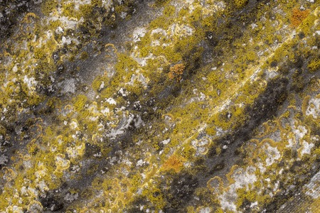 Background of old grey fluted slate with mosses on the surface