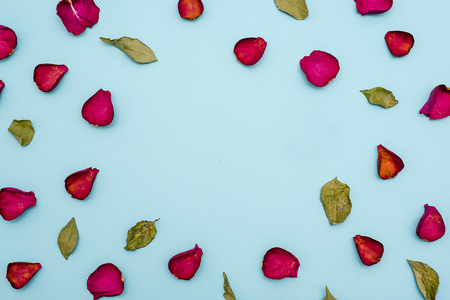 Background of maroon rose petals and green leaves on blue background. The view from the top. Blank for greetings, greeting cards, articles. Flat lay 版權商用圖片
