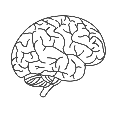 Vector image of the human brain with black lines on a white background. EPS 10