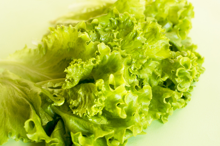 Leaves of appetizing lettuce on light green background