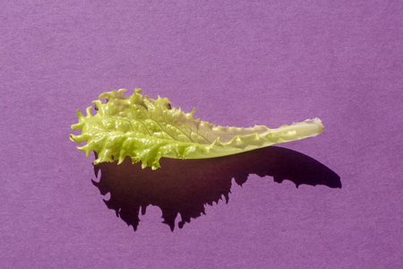 One leaf of green salad on purple background Zdjęcie Seryjne