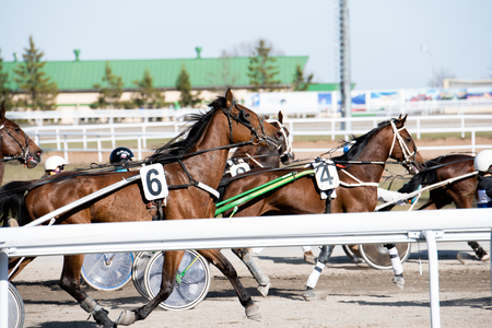 Beautiful horses on the racetrack during the competition on the trot