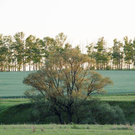 Beautiful summer landscape of hilly field