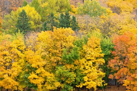Autumn colourful forest. Yellow, orange and green color trees. Top view Zdjęcie Seryjne