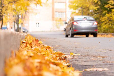 Autumn road with litter leaf along Zdjęcie Seryjne