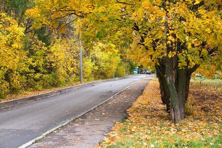 Autumn road with litter leaf along sidewalk Zdjęcie Seryjne