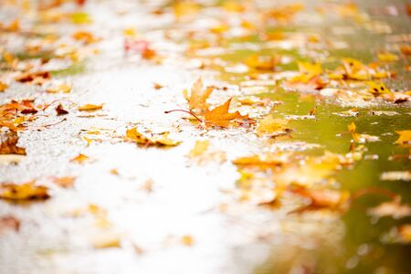 Colorful autumn leaves in rain puddle. Background.