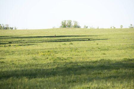 Beautiful summer landscape and roe deer on field