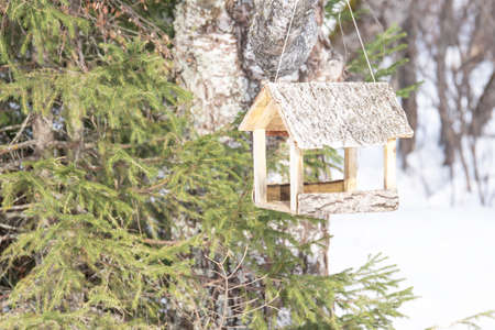 For feeding birds in the cold winter forest. Caring for the birds. Banque d'images