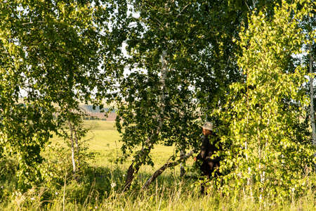 Harvesting birch brooms for the bath on a summer day. Traditions. Health.