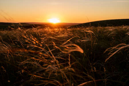 Summer sunset, stipa in the steppe. A beautiful field. The grass twists in the wind. Poaceae. Reklamní fotografie