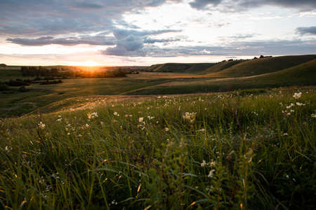Spring landscape. Sunset over a field with hills, green grass, sun rays, white wildflowers in the foreground. Nature.