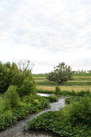 A winding river with trees growing next to it. Summer cloudy calm day. Vertical photo. Russia. Bashkortostan.