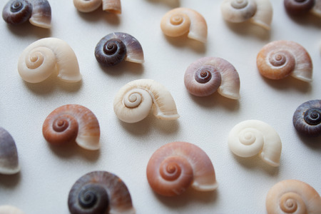 Spiral seashells pattern isolated on white background close up Imagens