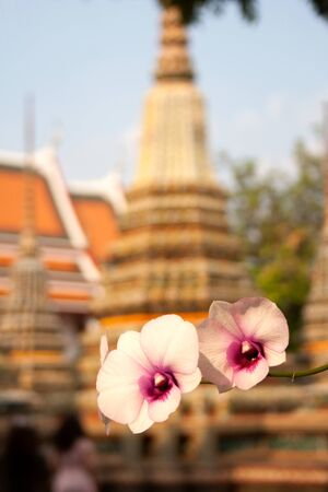 Blooming orchid flowers in front of Phra Chedi Rai building silhouette within Wat Pho temple complex in Bangkok, Thailand