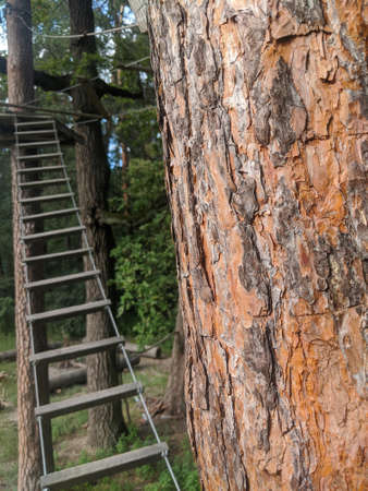 Forest tree stem bark close up with rope ladder on the background
