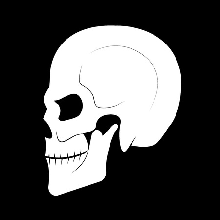 side view: Skull from the side view.