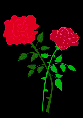 two red rose isolated on black background Vector