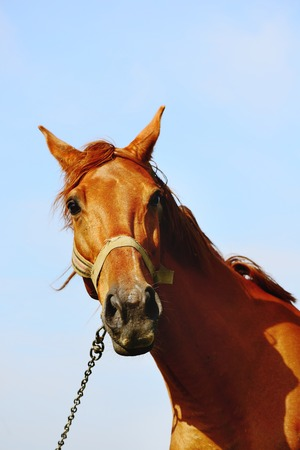Portrait of a brown horse standing in field alone, summertime. photo