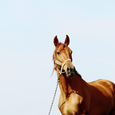 beast ranch: brown horse standing in field alone, summertime