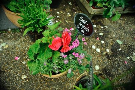 flowerpot: pink flowerpot