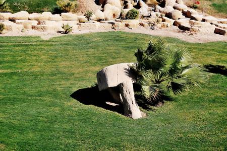 palmetto: Palmetto Palm