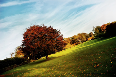 Autumn comes to park in Aalborg, Denmark