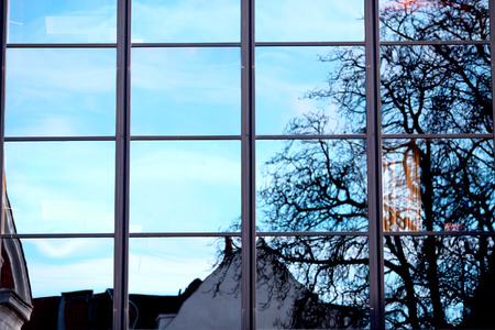 reflaction: Reflaction of the tree in the window